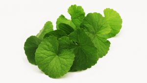 642x361_Gotu_Kola_The_Cure_for_Varicose_Veins
