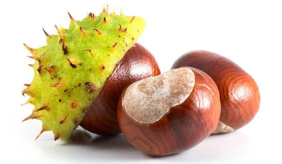 castan și fructe varicoase