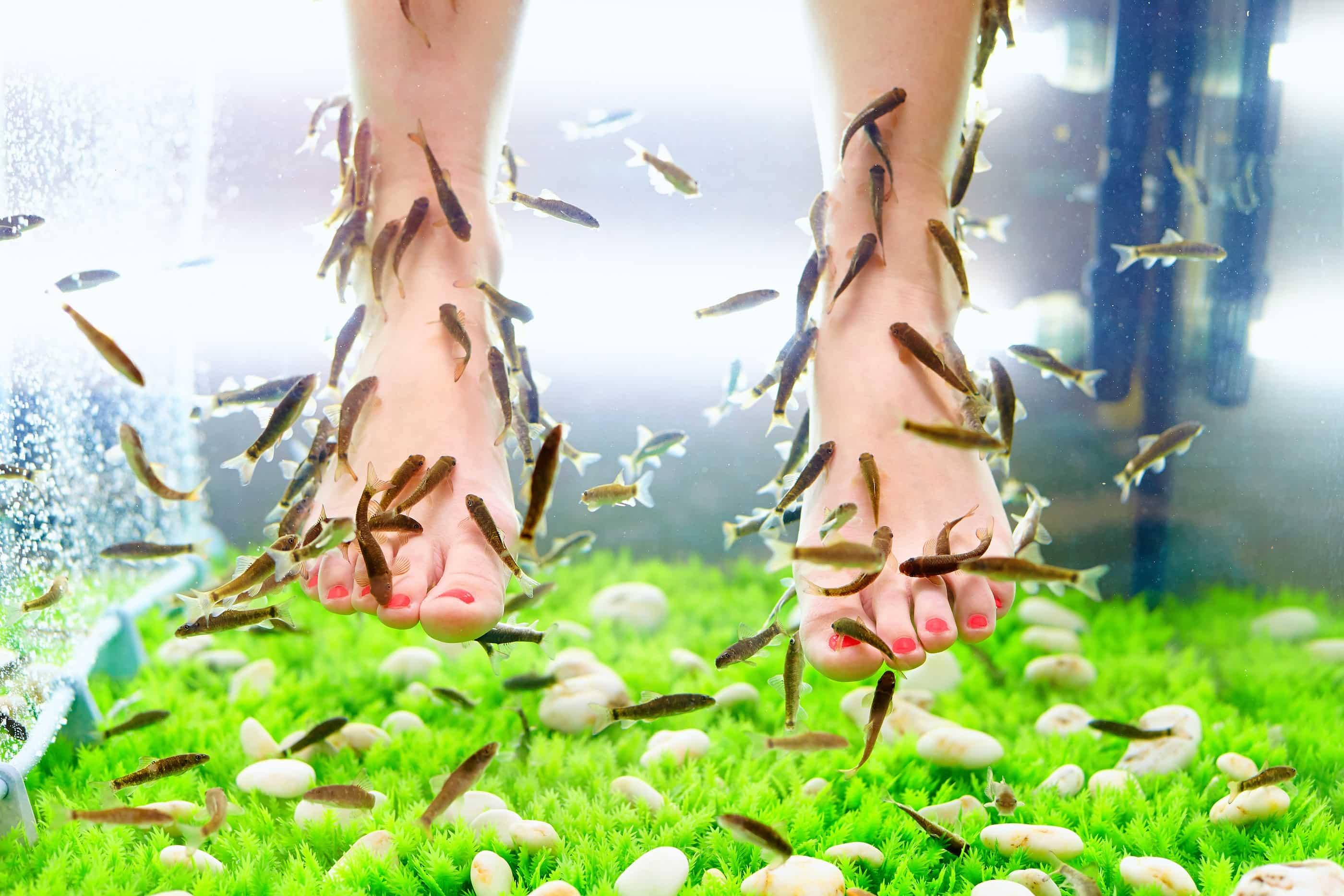 tratați articulația picioarelor)