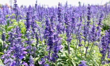 Tratamente naturiste. Planta sacră care vindecă 5 boli grave. Află de ce egiptenii antici erau mai sănătoși decât noi și cu ce se tratau