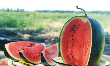 Tratamente naturiste. Arunci semințele de pepene verde? Mare greșeală faci! Află ce boli poți să vindeci cu ajutorul lor și cum!